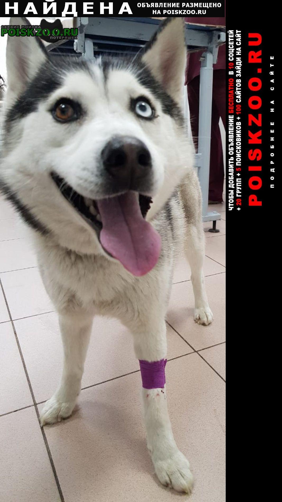 Найдена собака Ярославль