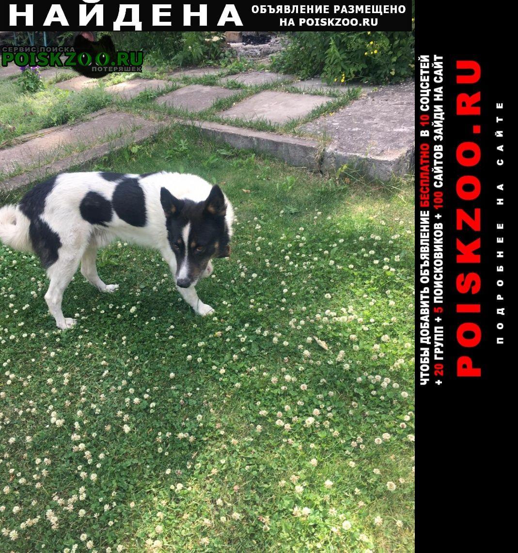 Найдена собака кобель черно белый пес г.Уфа