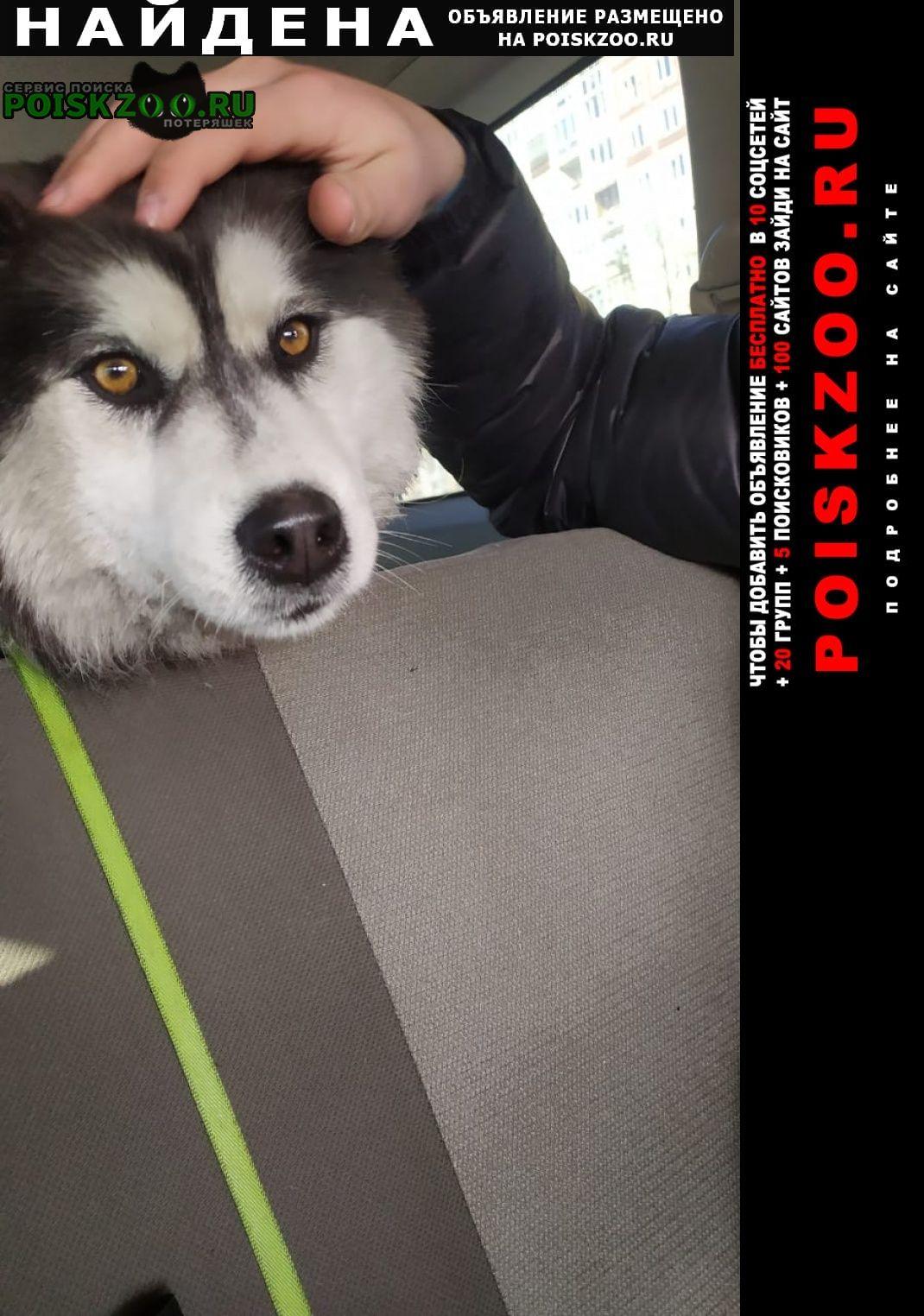 Найдена собака помогите найти хозяина Новокузнецк