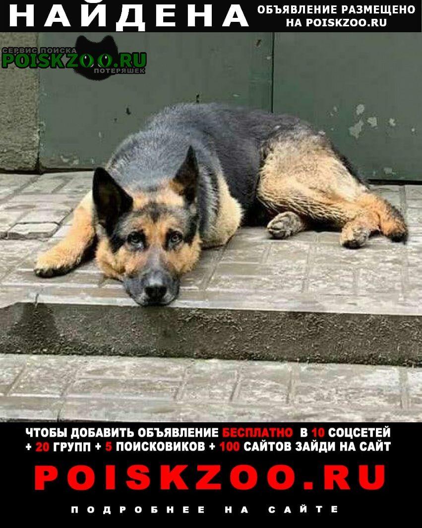 Найдена собака кобель овчарки Ростов-на-Дону