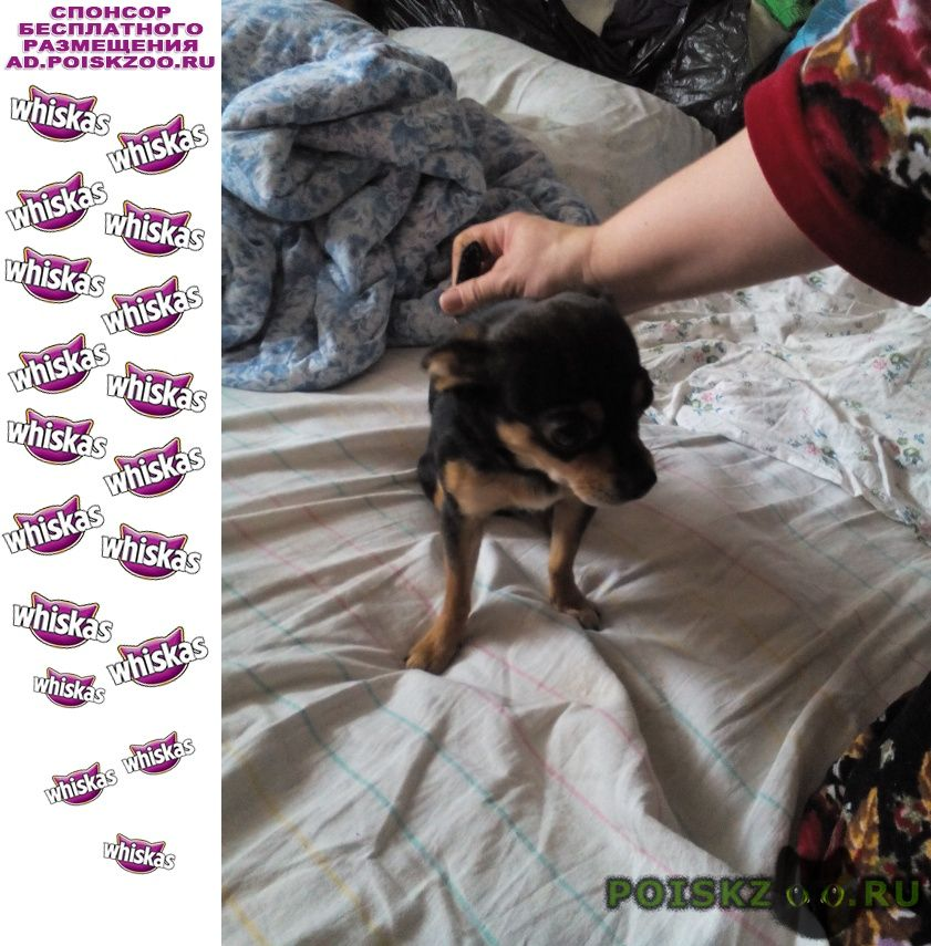 Найдена собака кобель в районе ул. звёздная г.Псков