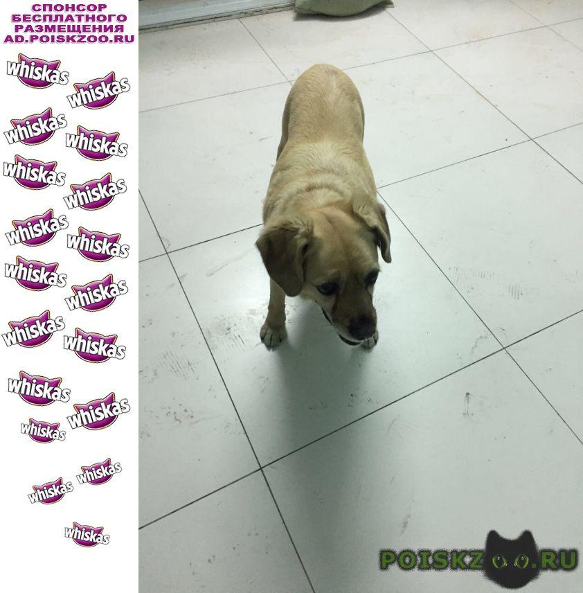 Найдена собака в районе патрокл г.Владивосток