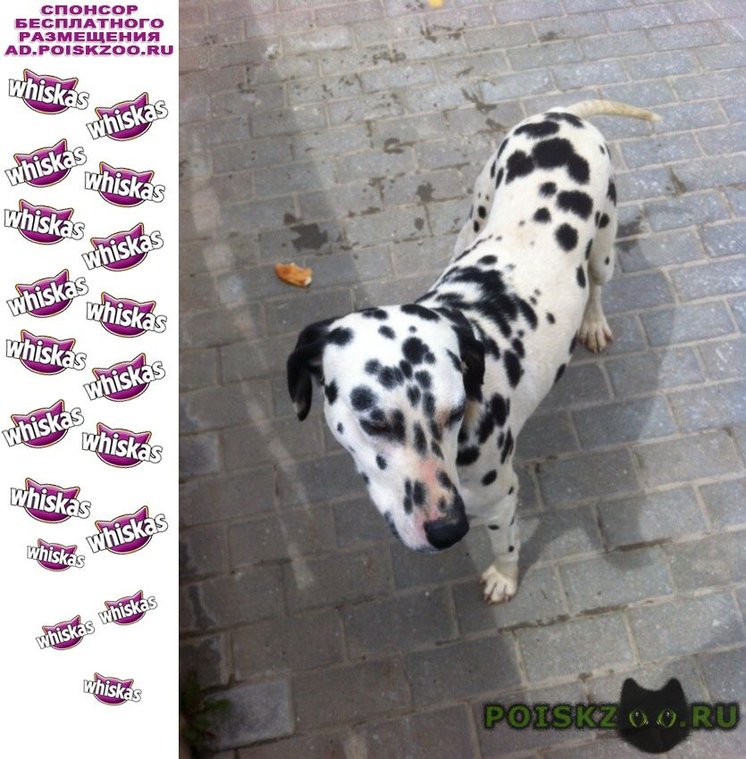 Найдена собака поселок архыз романтик г.Черкесск Карачаево-Черкесская Республика