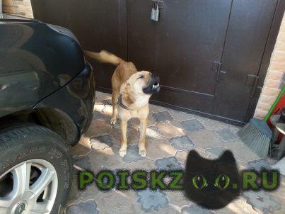 Найдена собака девочка г.Чехов