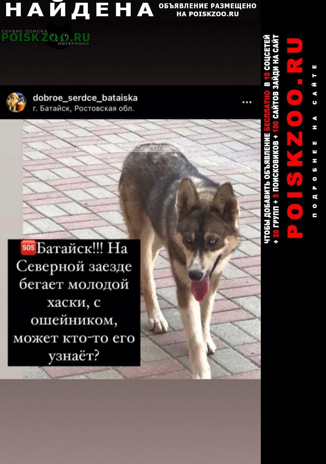 Найдена собака Батайск