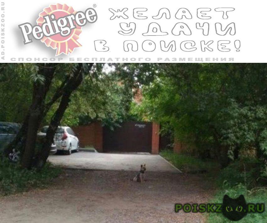 Найдена собака кобель найдись хозяин.меня зовут сенечка. г.Ростов-на-Дону
