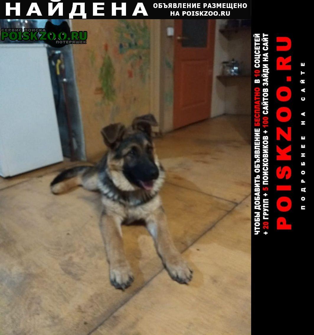 Найдена собака щенок немецкой овчарки Пермь
