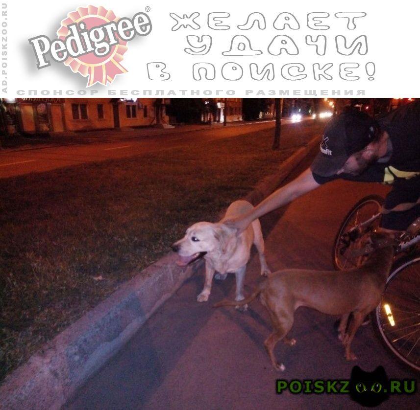 Найдена собака кобель видели г.Днепропетровск