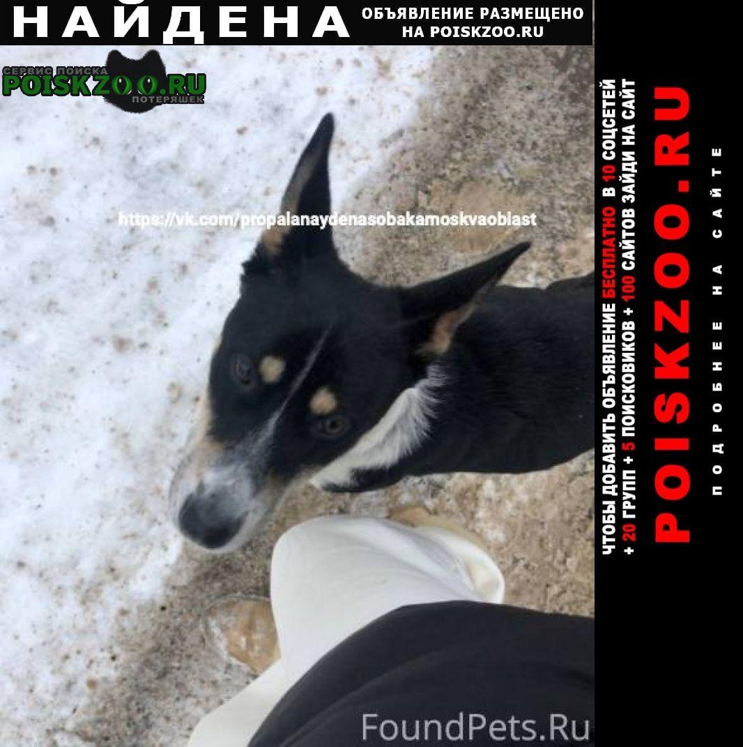 Найдена собака на шее синий тряпичный ошейник. Чехов