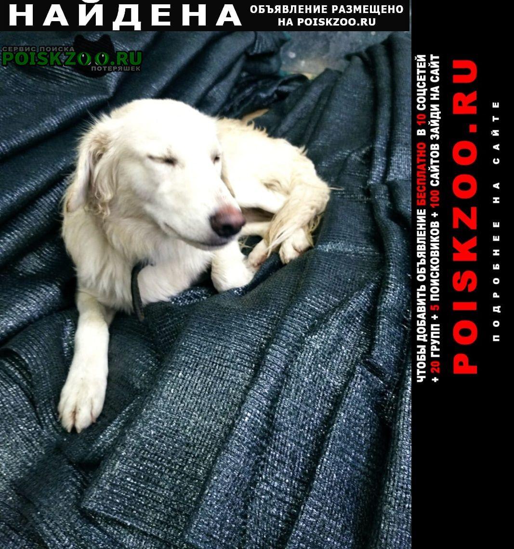 Найдена собака белый пёс Таганрог