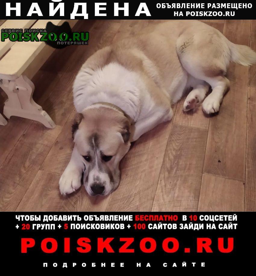 Найдена собака в сумбулово. Спасск-Рязанский
