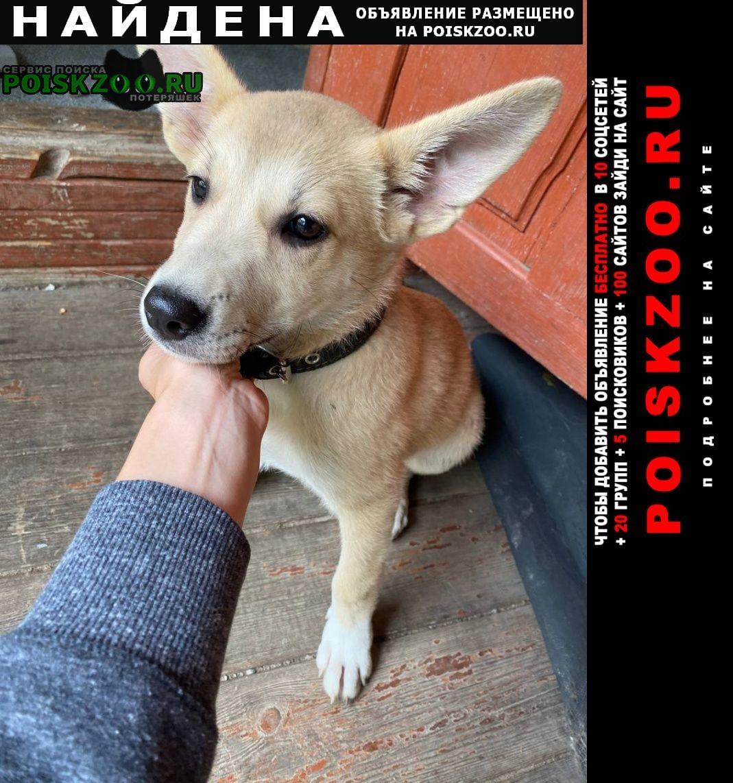 Найдена собака в районе толстопальцево, у конюшни. Лесной Городок