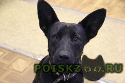 Найдена собака кобель г.Конаково