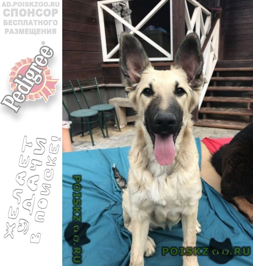 Найдена собака г.Балашиха