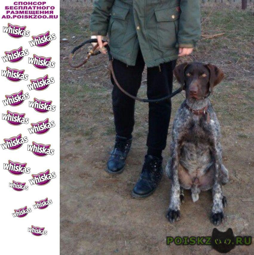 Найдена собака кобель г.Волжский (Волгоградская обл.)