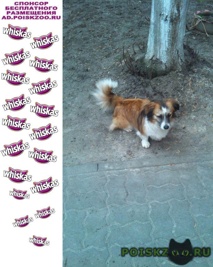 Найдена собака г.Белгород