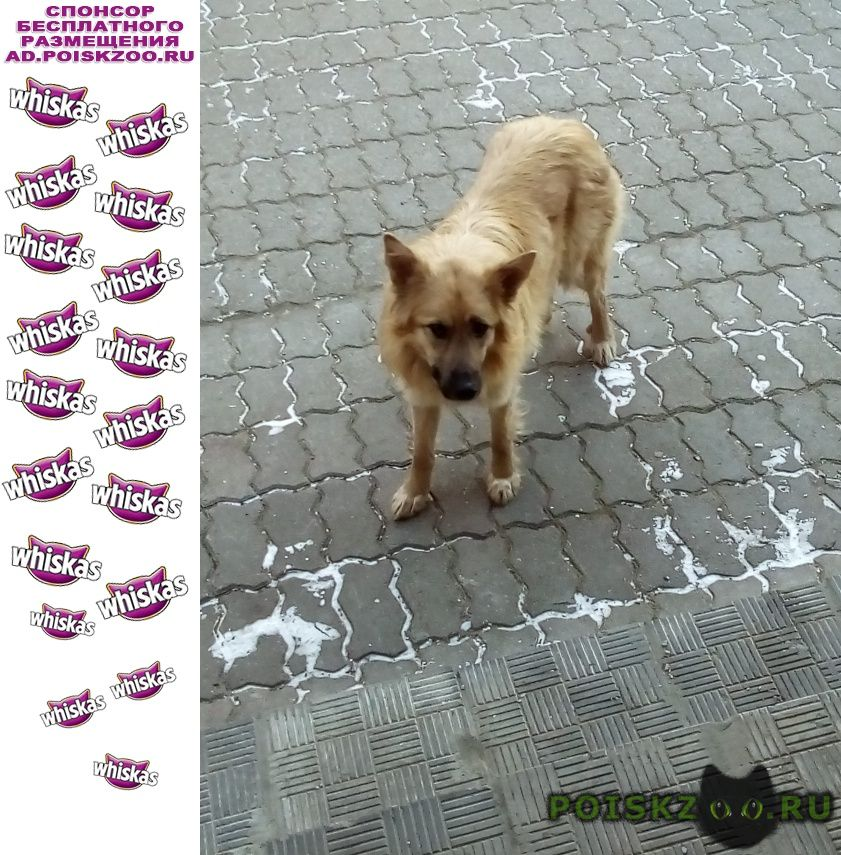 Найдена собака г.Мытищи