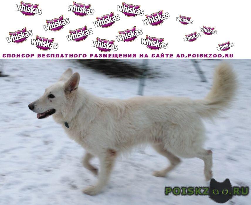 Найдена собака кобель мо, москва. бшо г.Пушкино