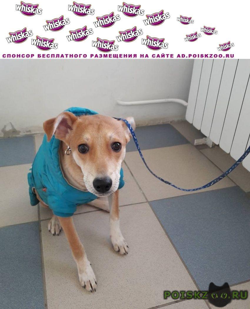 Найдена собака в синей курточке, с ошейником г.Волгоград