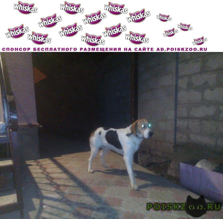 Найдена собака кобель г.Славянск-на-Кубани