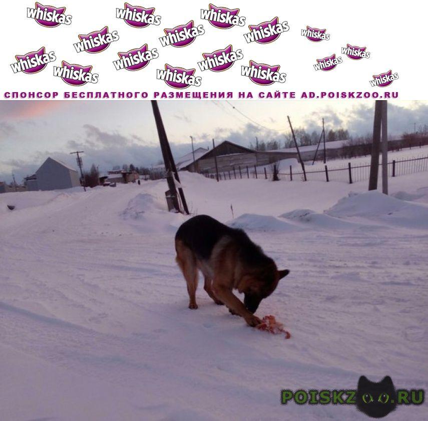 Найдена собака кобель г.Томск