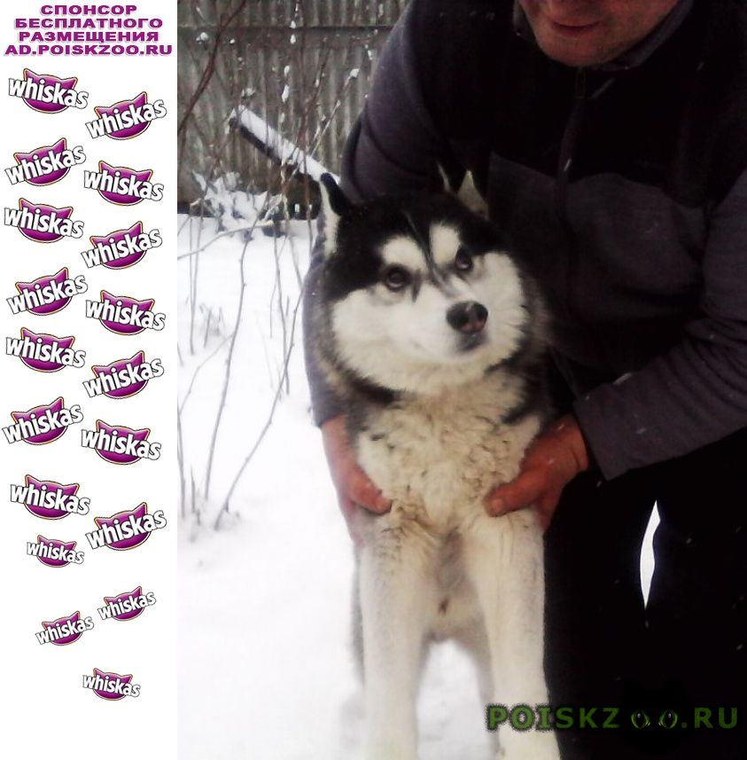 Найдена собака кобель г.Верея