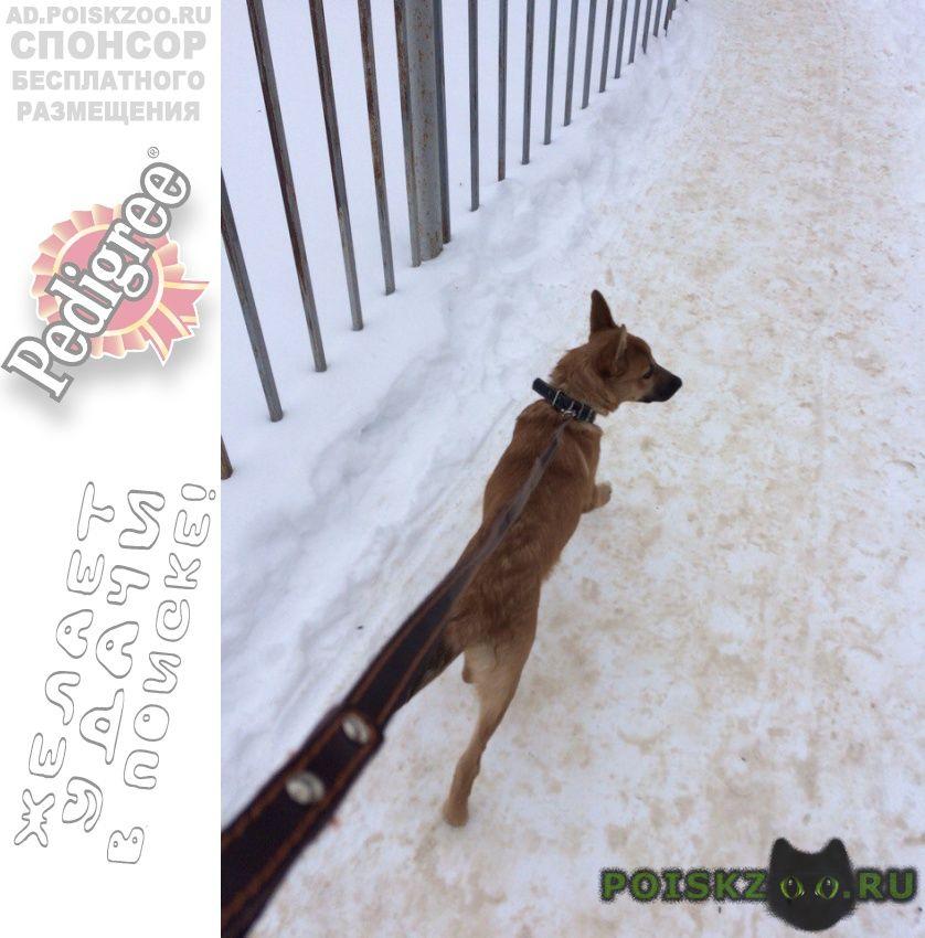 Найдена собака г.Рыбинск