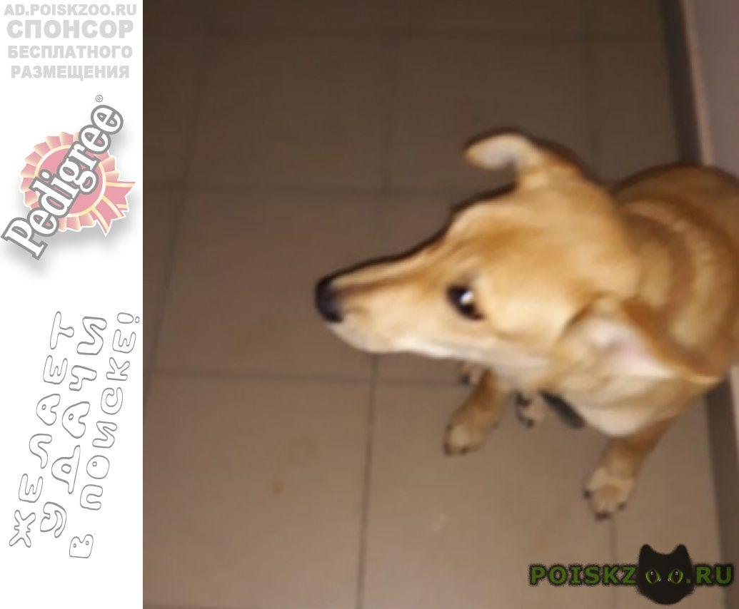 Найдена собака г.Нефтеюганск