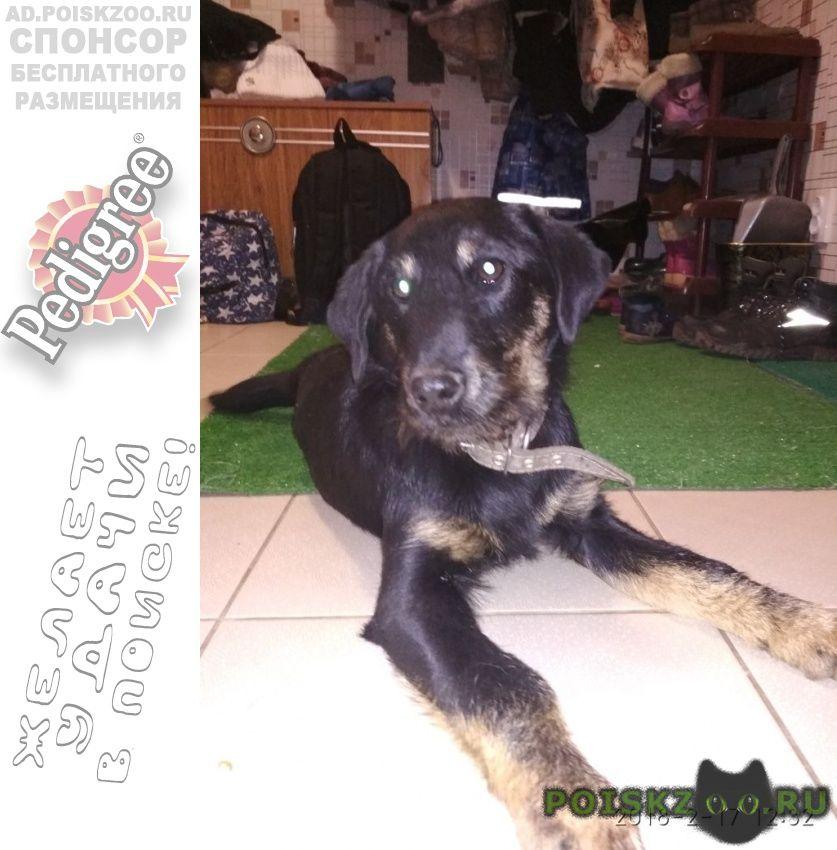 Найдена собака ягд-терьер, девочка. г.Невинномысск