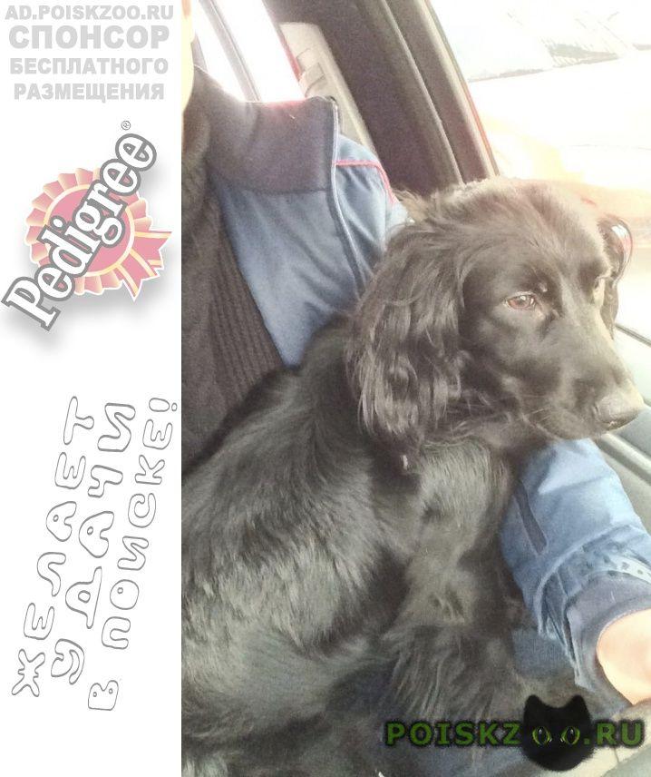 Найдена собака в октябрьском районе г.Новосибирск