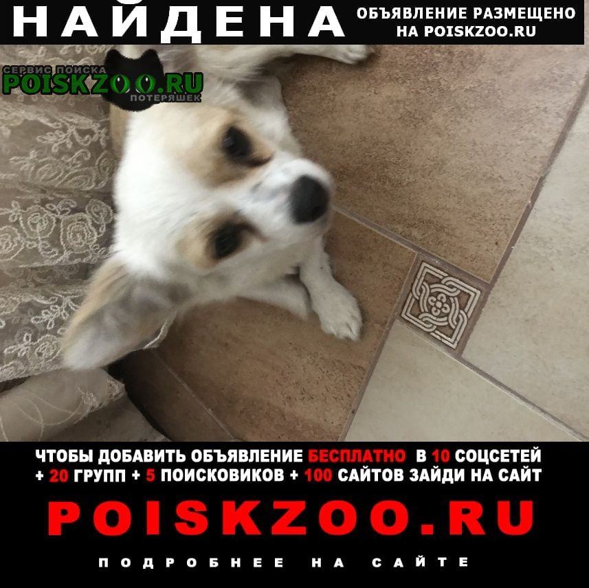 Найдена собака приблудилась собачка в посёлке лермонто Джубга