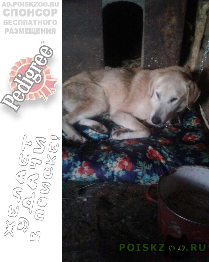 Найдена собака кобель г.Ревда (Свердловская обл.)