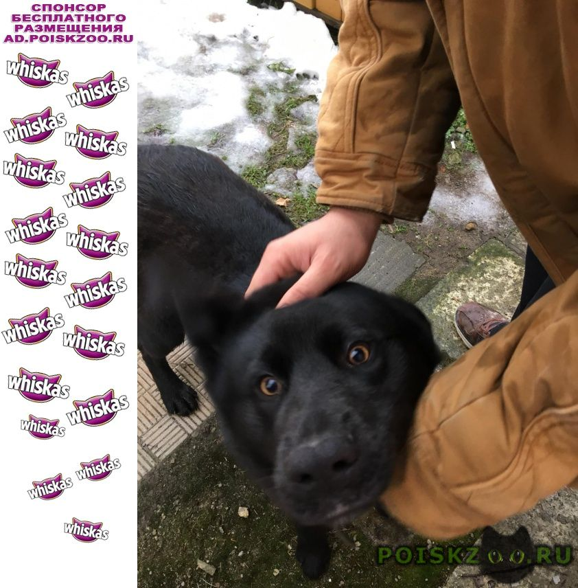 Найдена собака кобель г.Павловский Посад