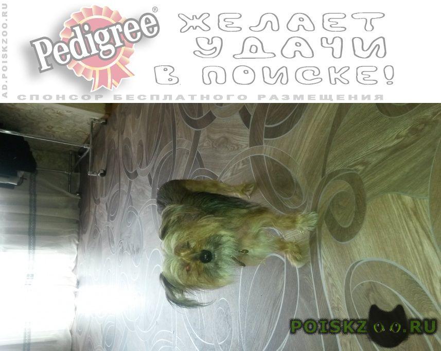 Найдена собака г.Хабаровск