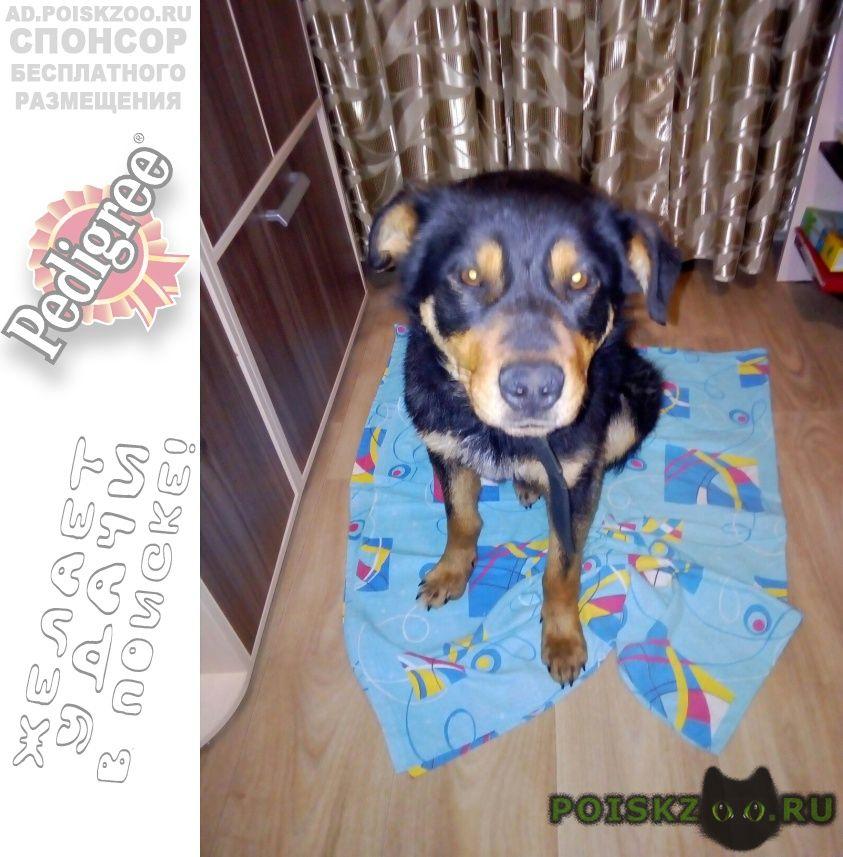 Найдена собака г.Ярославль