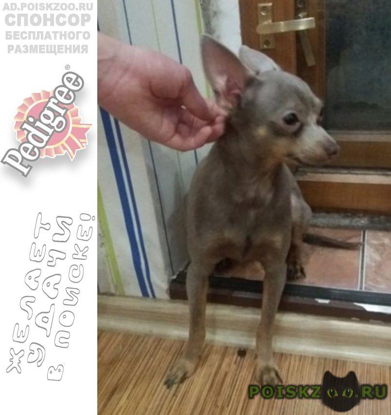 Найдена собака кобель г.Ярославль