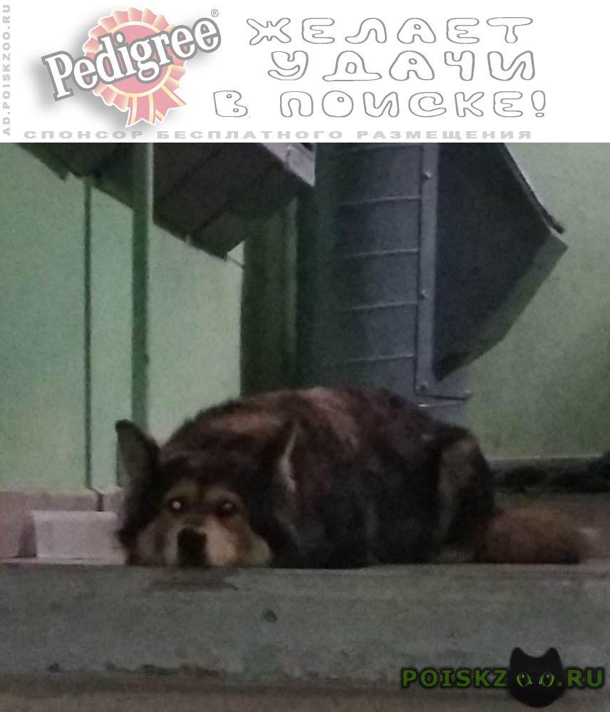 Найдена собака в ошейнике самка. г.Москва