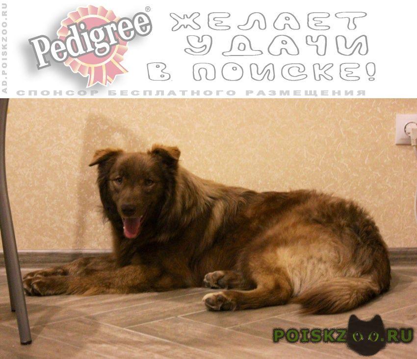 Найдена собака кобель только самым ответственным г.Краснодар