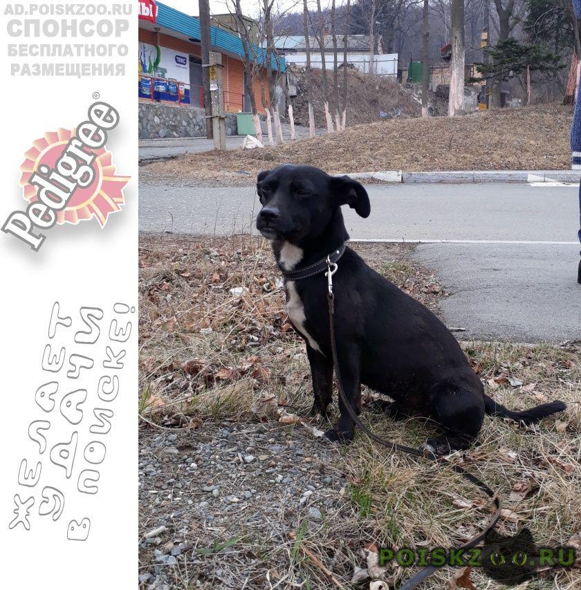 Найдена собака кобель район седанкинского спуска г.Владивосток