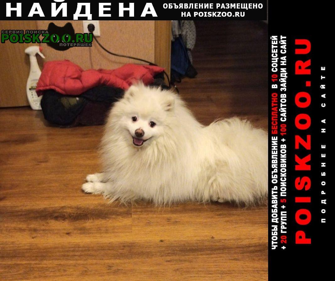 Найдена собака кобель отдам хозяевам Пушкино