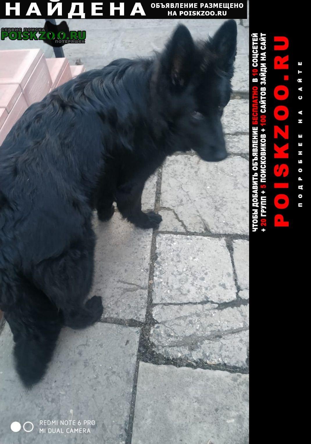 Найдена собака чёрная сука, большая, с ошейником Сызрань