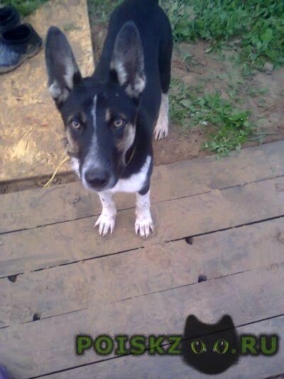Найдена собака кобель г.Вороново