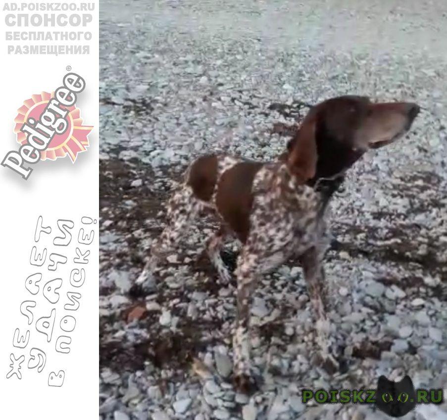 Найдена собака кобель в голубой бухте г. г.Геленджик