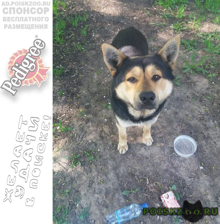 Найдена собака м. сходненская г.Москва