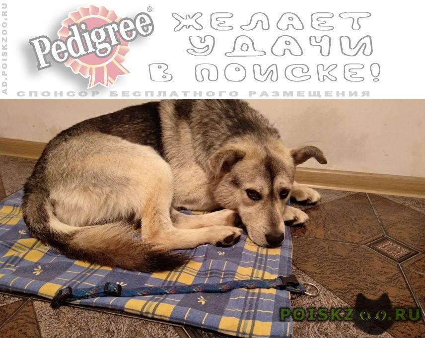 Найдена собака кобель метис с синим ошейником г.Москва