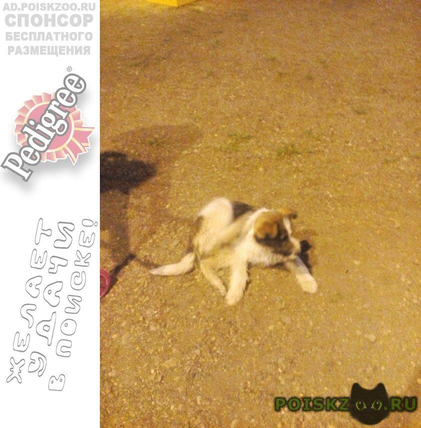Найдена собака г.Оренбург