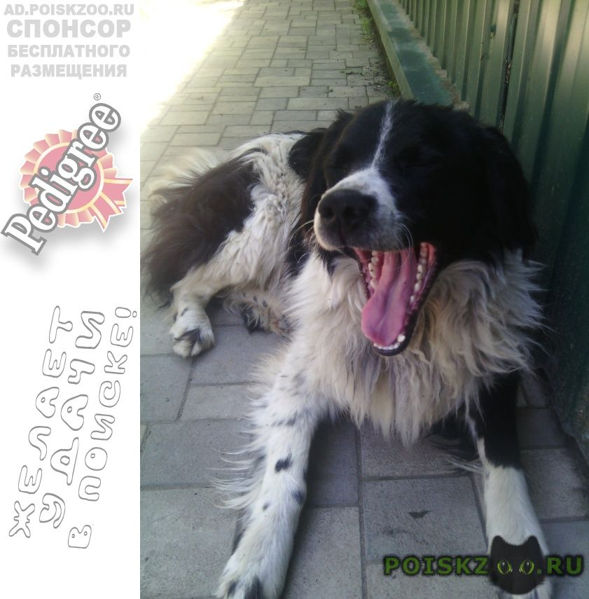 Найдена собака кобель sos  соседи вызывают живодерню г.Краснодар