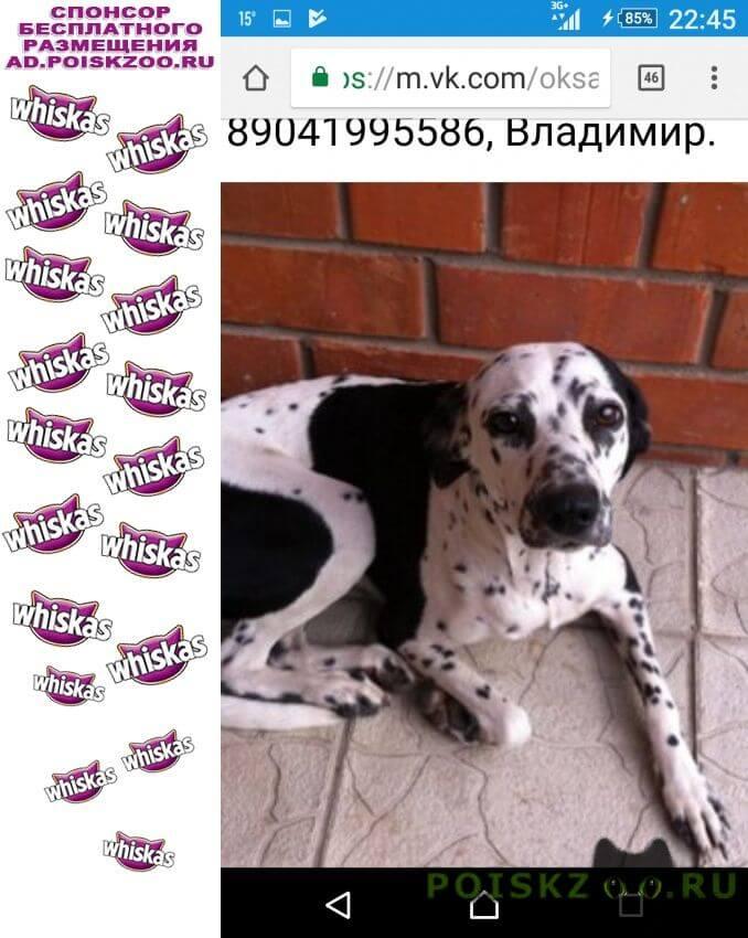 Найдена собака далматин девочка на порту г.Димитровград