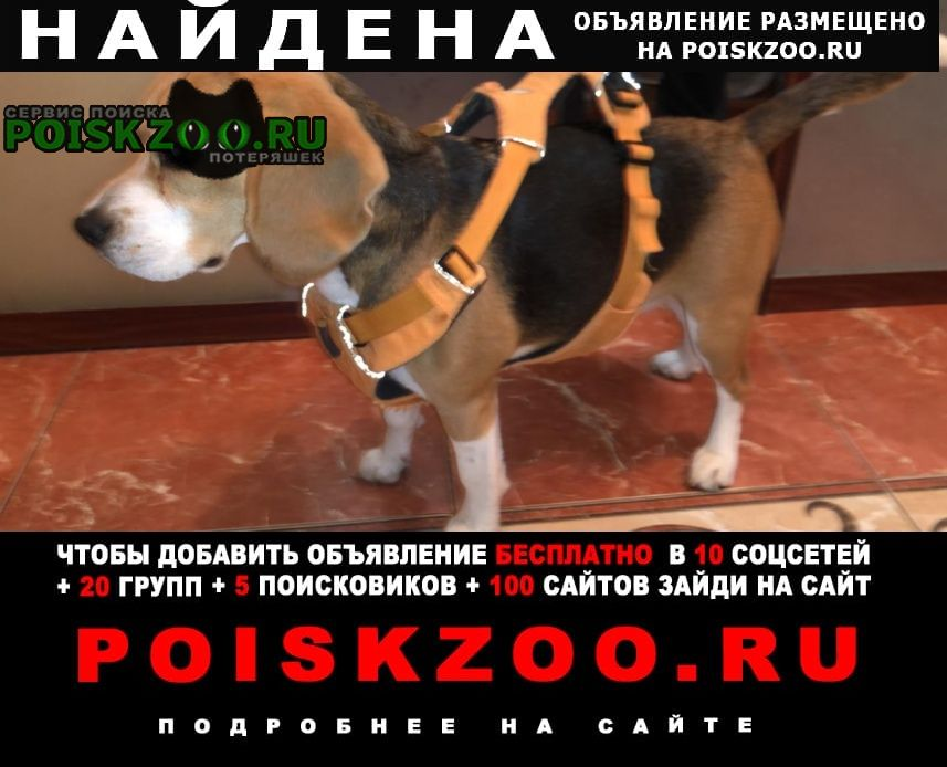 Найдена собака бигль Москва