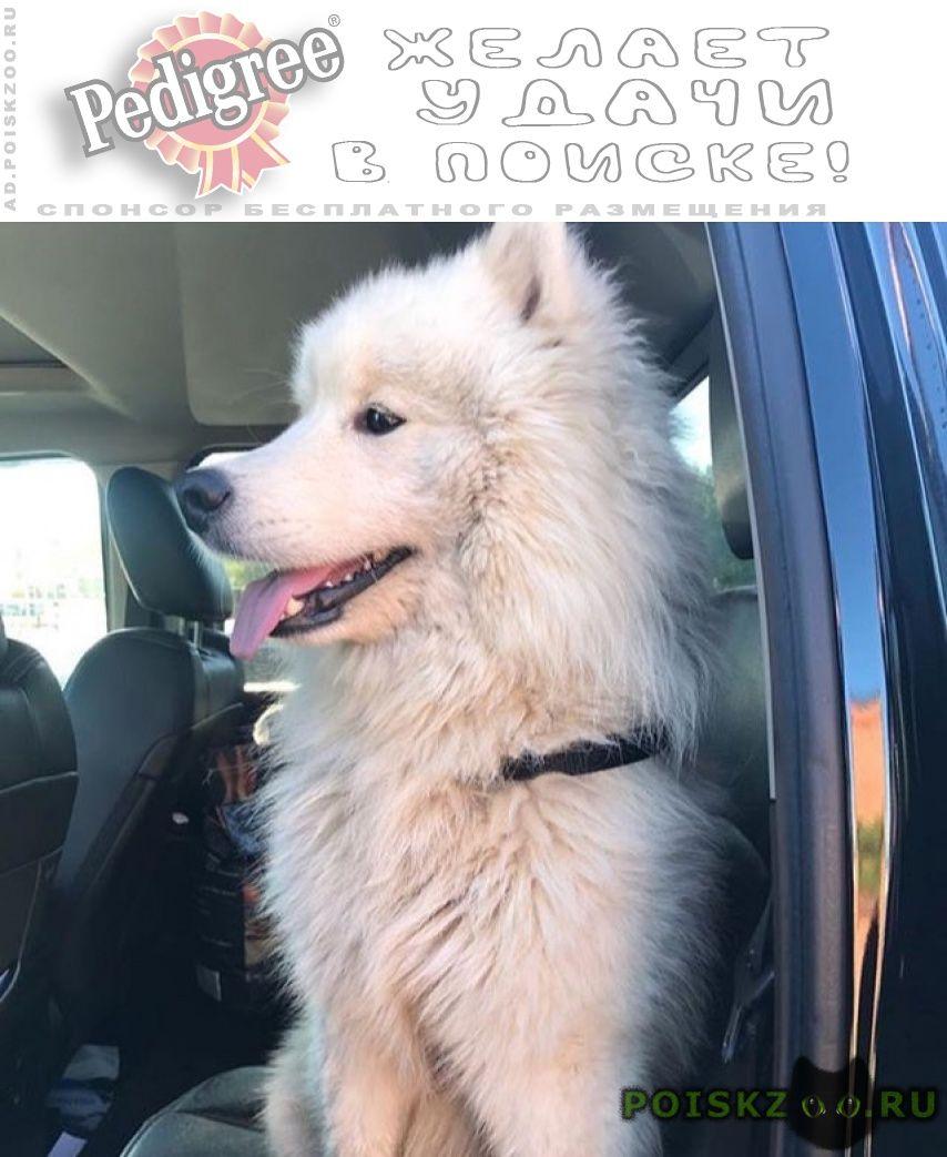 Найдена собака кобель снт пенино г.Москва